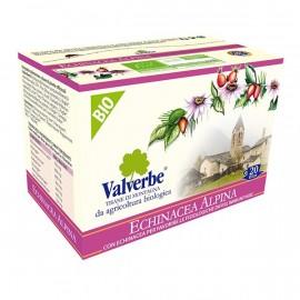 Echinacea Alpina - Valverbe